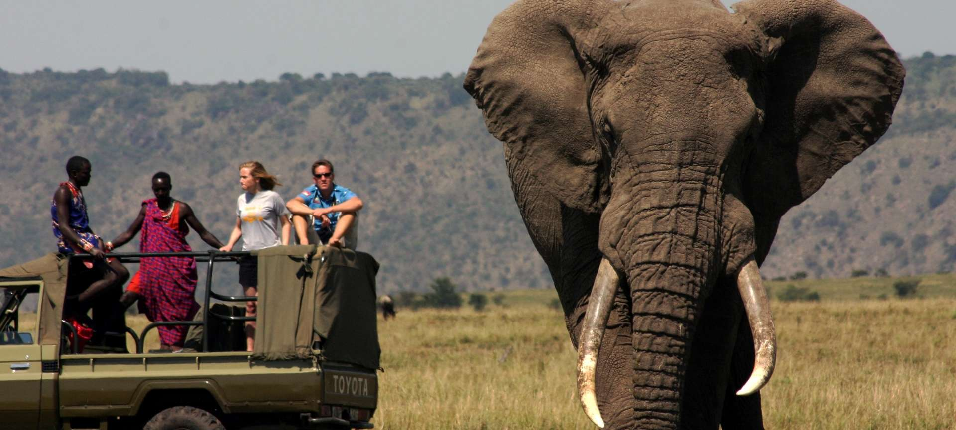 Africa's biggest elephant and the endangered Hunter's ...