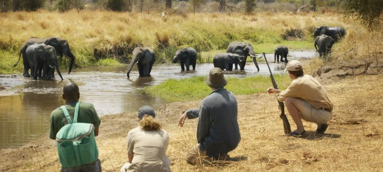 The Serengeti on Foot (EA 9 days) - Africa Wildlife Safaris