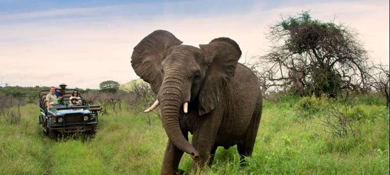 South African holiday adventure - Africa Wildlife Safaris