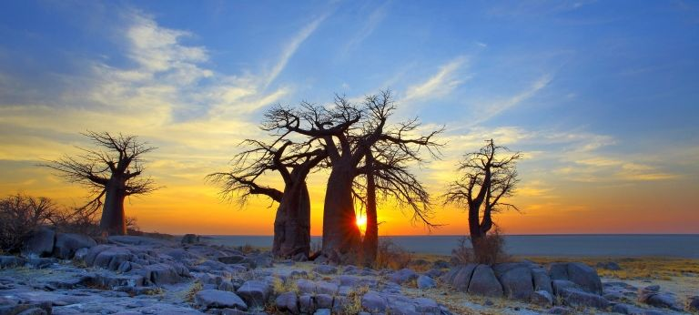 Makgadikgadi Pans and Okavango Delta Safari Adventure (7 days) - Africa Wildlife Safaris