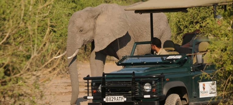 | Sabi Sand Game Reserve safari