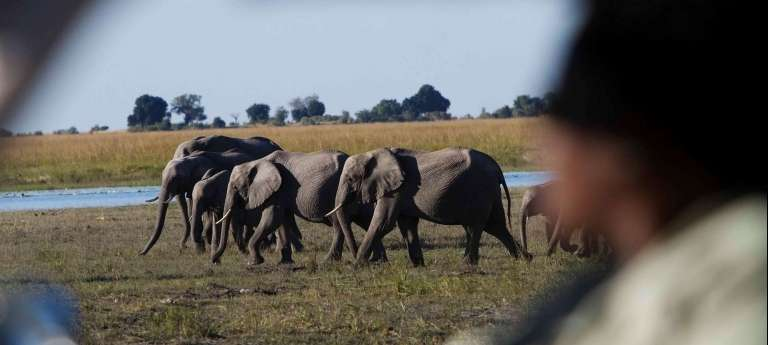 | Chobe National Park - Savuti Area Safari