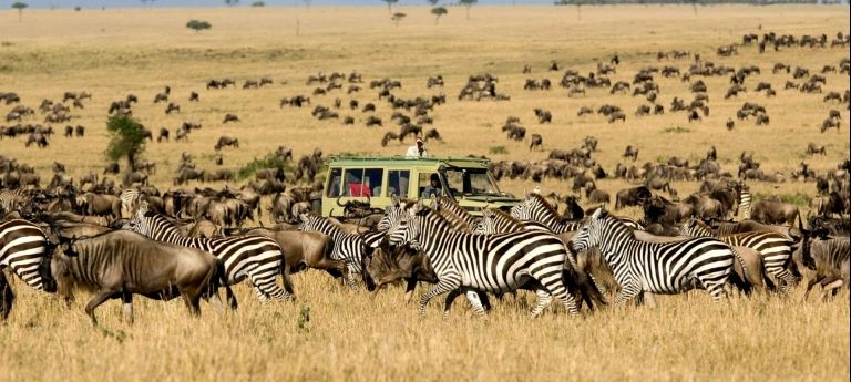 August Migration Safari with HerdTracker (10 days) - Africa Wildlife Safaris