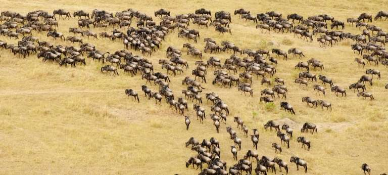 Tanzania June/July Great Migration safari with HerdTracker