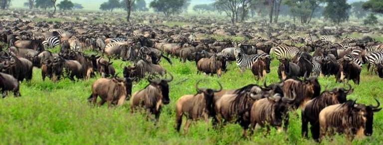 HerdTracker July/October Great Wildebeest Migration safari - Africa Wildlife Safaris