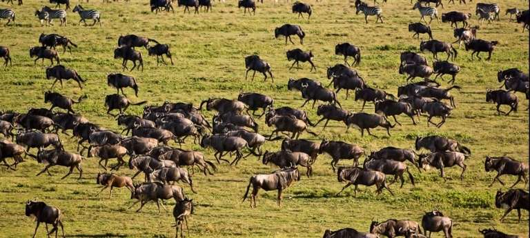 9-day Great Wildebeest Migration safari with HerdTracker - Africa Wildlife Safaris