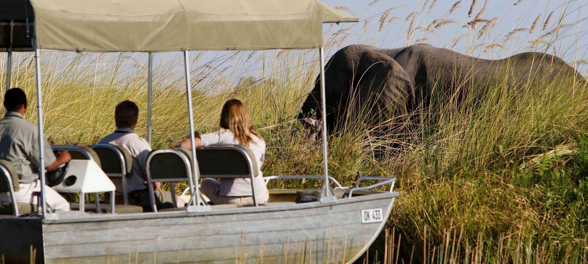 8-day Botswana premier safari collection