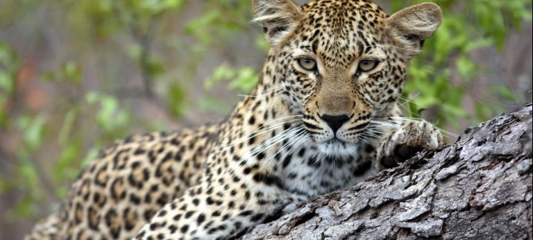 Forray into the Wilderness of Sabi Sands and Madikwe  (7 days)