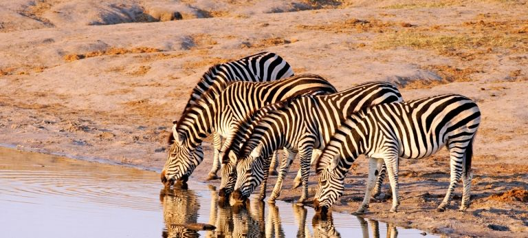| Wild Zimbabwe Safari (7 days)