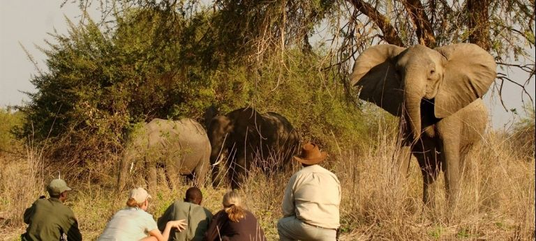 | Best of Zambia Wilderness Safari (10 days)