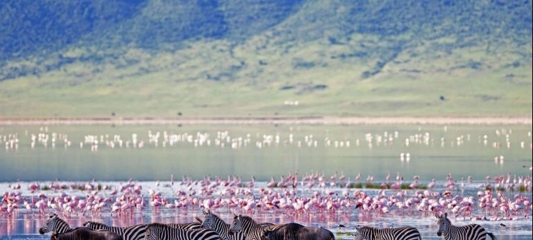 Affordable Ngorongoro and Serengeti Safari (6 days) - Africa Wildlife Safaris