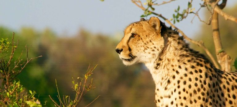Tanzania wildlife and cultural safari