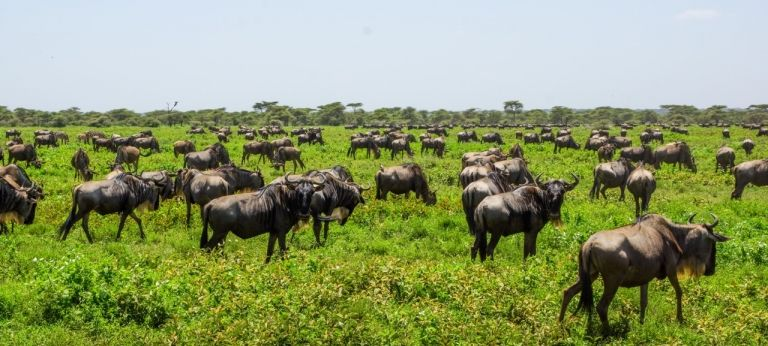 8-day June/July Great Migration safari in Tanzania (Value-for-money)