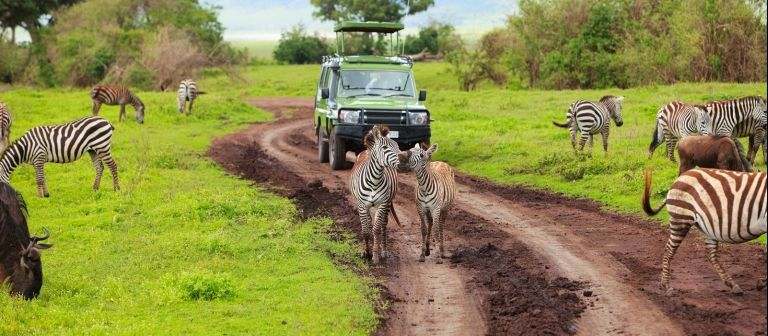 Tanzania Great Migration June/July 2021 safari (Luxury)