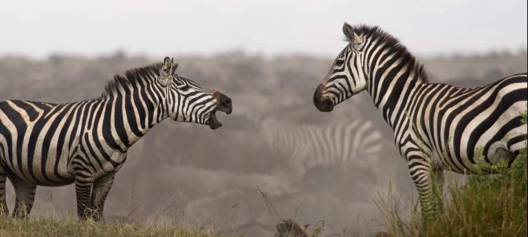 2020 Tanzania August to October Great Migration safari (Best for budget) - Africa Wildlife Safaris