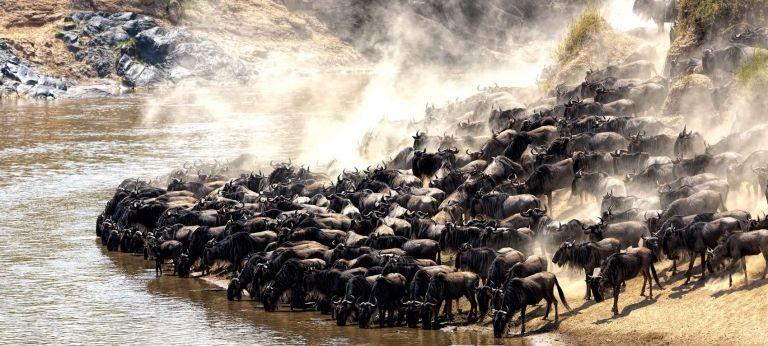 | 9-day Great Wildebeest Migration safari (Luxury)