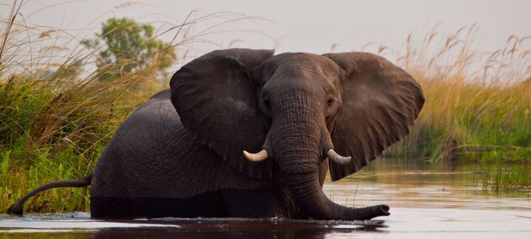 | Wilderness and Wildlife in Northern Botswana (7 days)