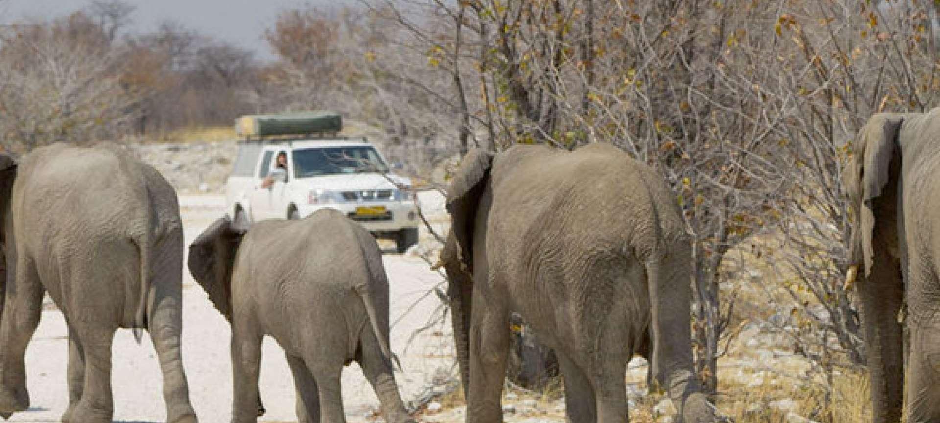 Best of Namibia, Botswana & Victoria Falls Guided Self-Drive Safari