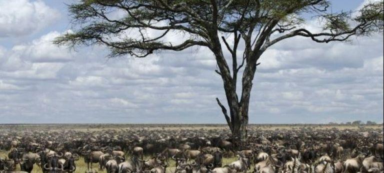 | Tanzania and Kenya Highlights Safari (10 days)