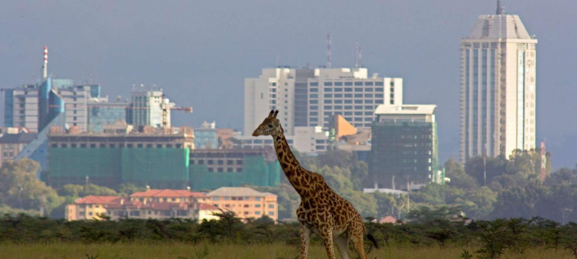 Nairobi - Africa Wildlife Safaris
