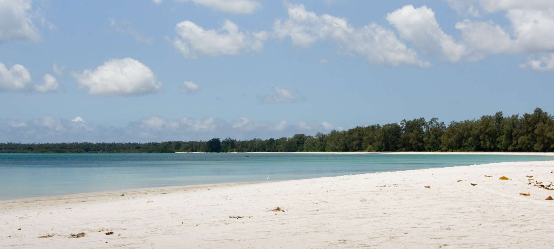 Pemba - Africa Wildlife Safaris