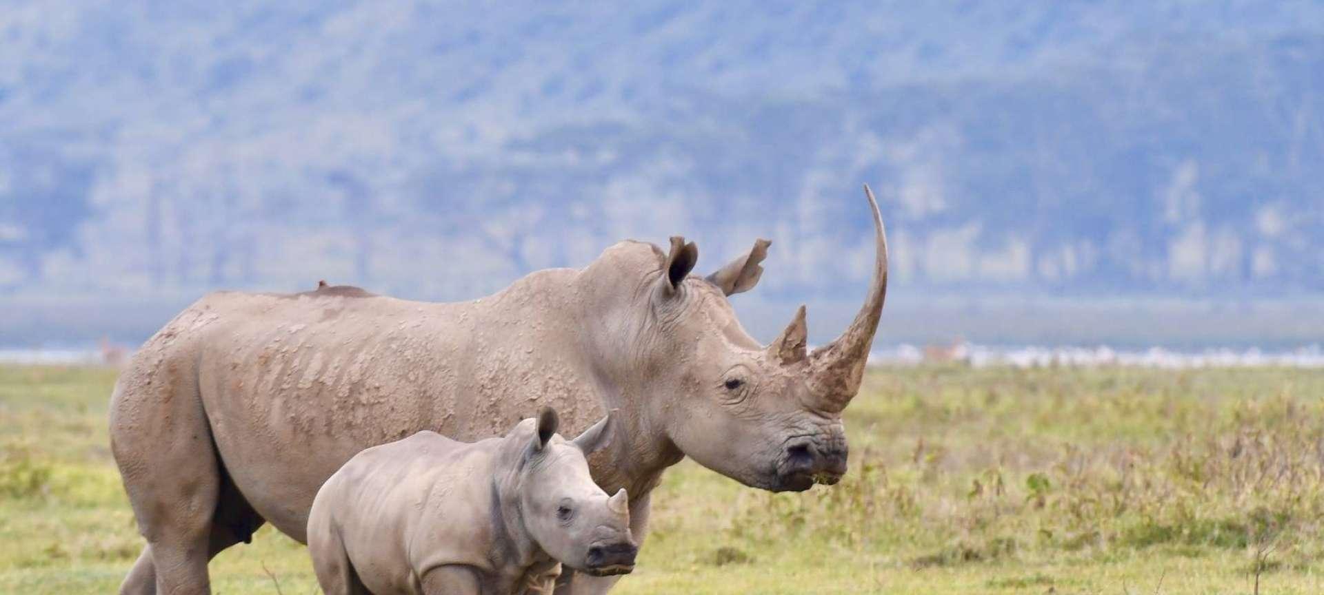 Africa - Africa Wildlife Safaris