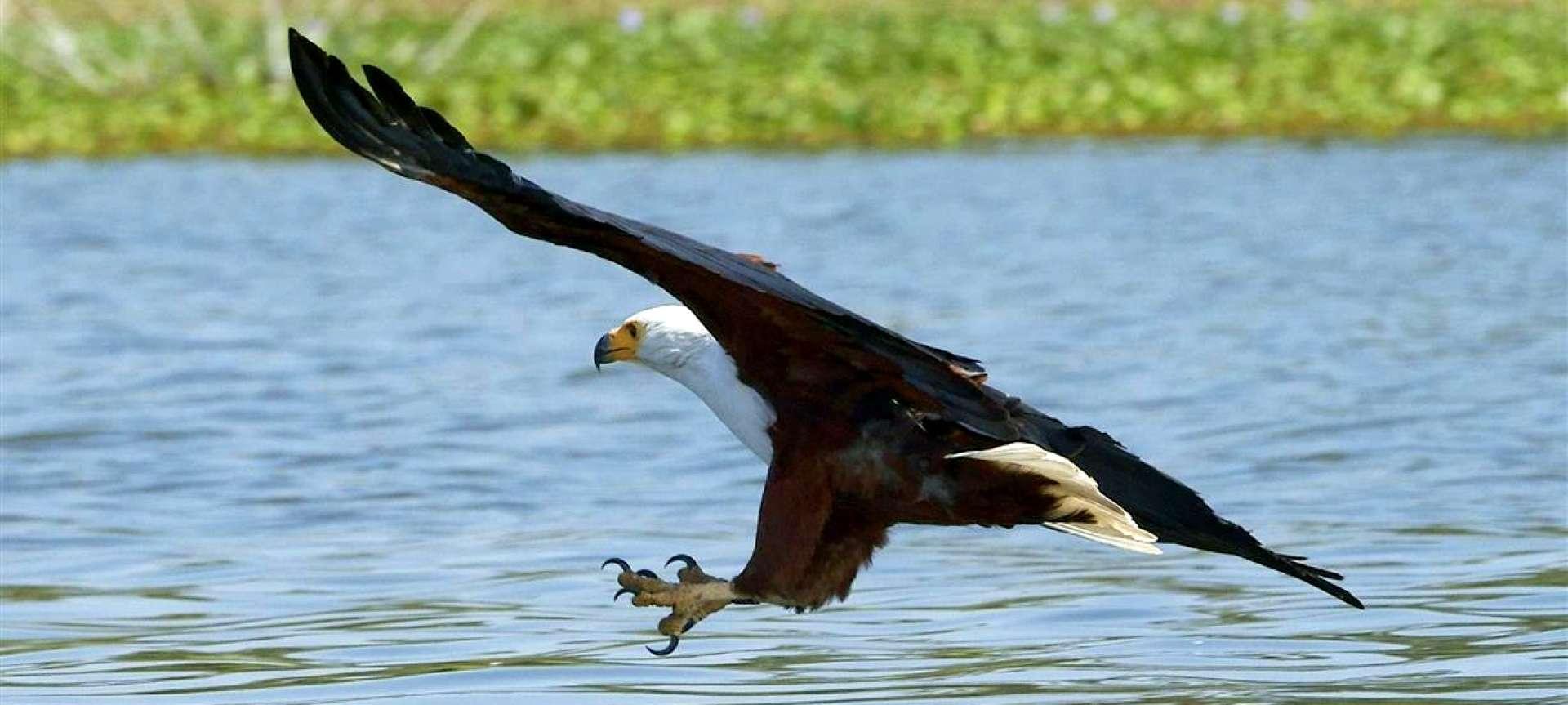 Lake Naivasha National Park - Africa Wildlife Safaris