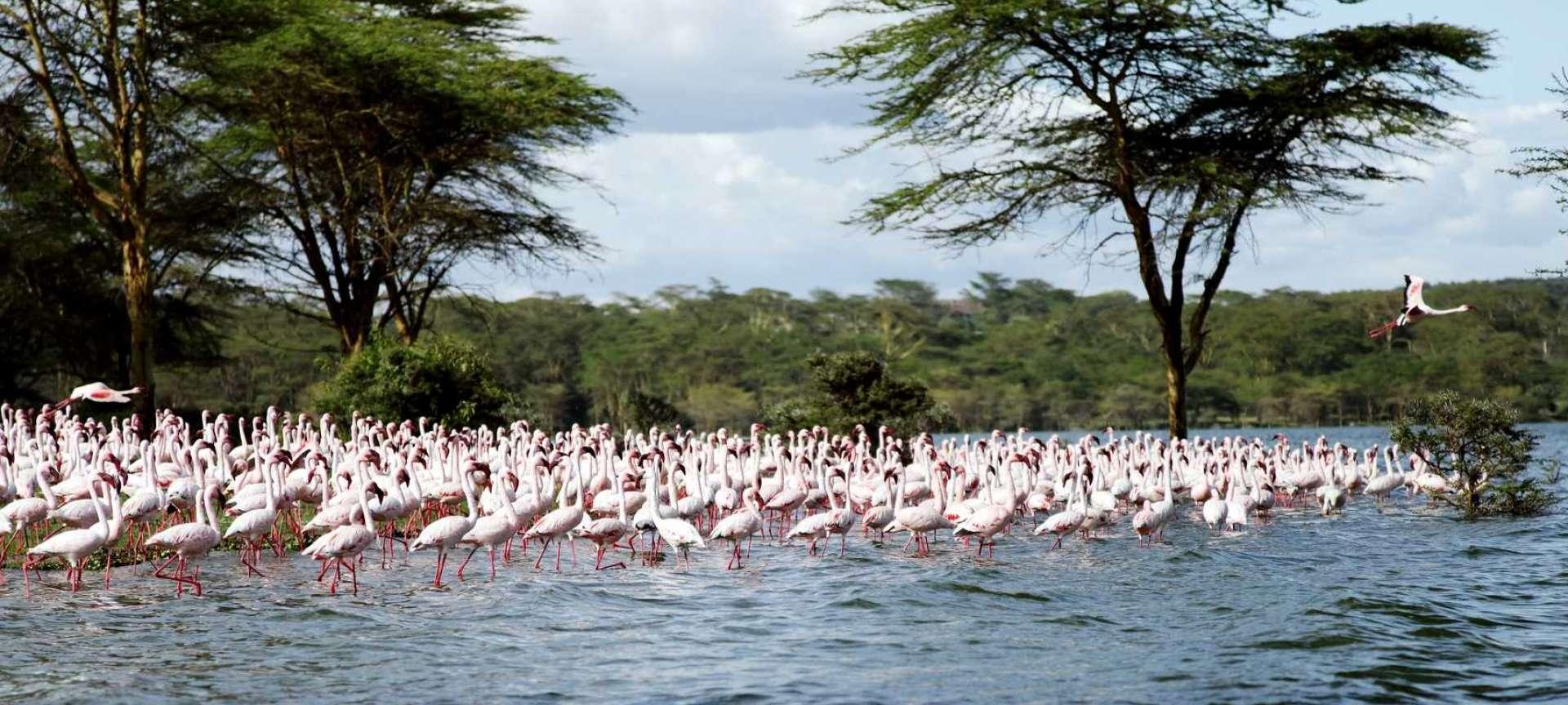 Lake Naivasha_Flamings_Kenya