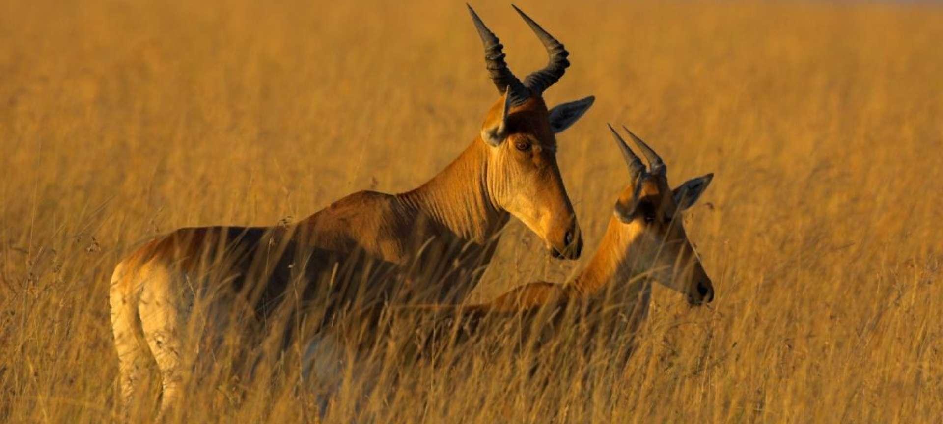 Mkomazi - Africa Wildlife Safaris