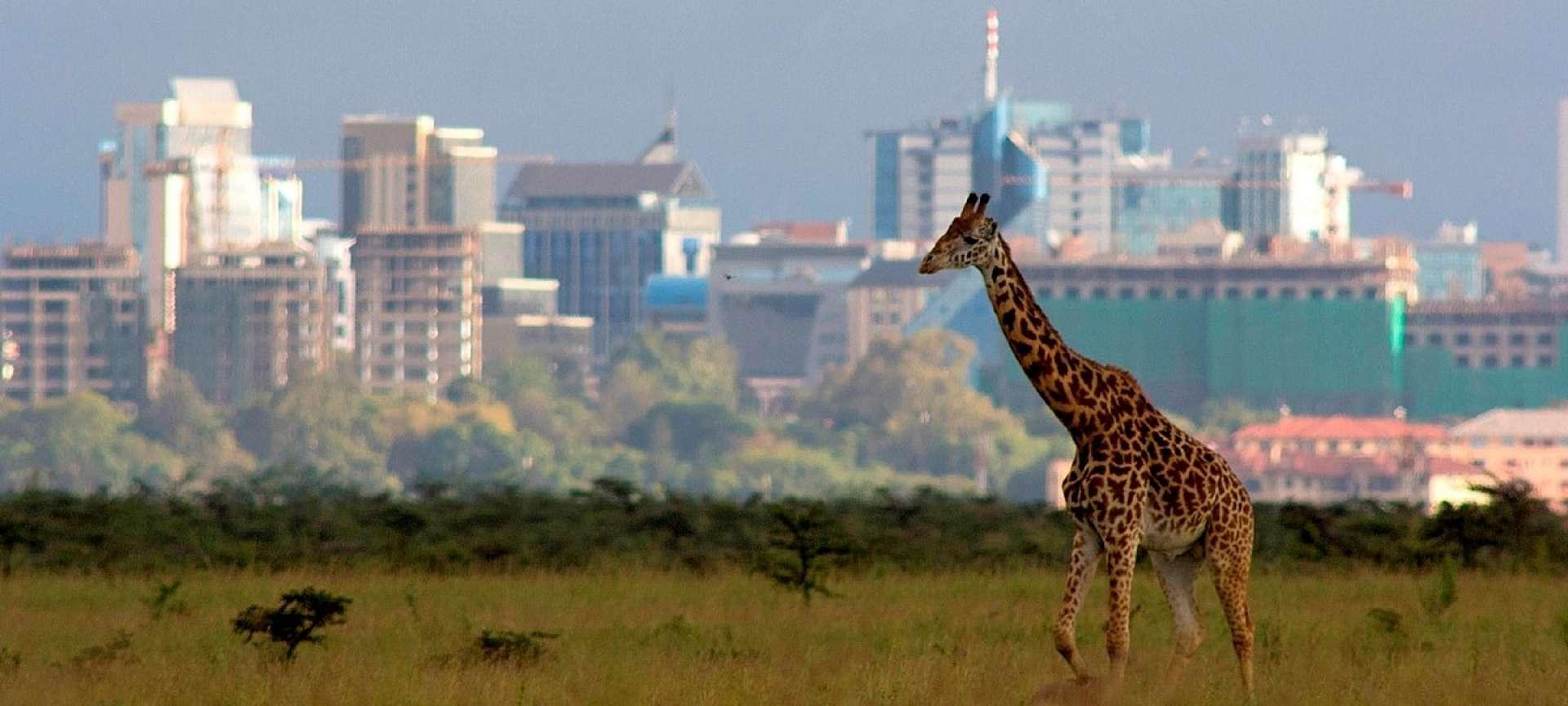 Nairobi National Park - Africa Wildlife Safaris