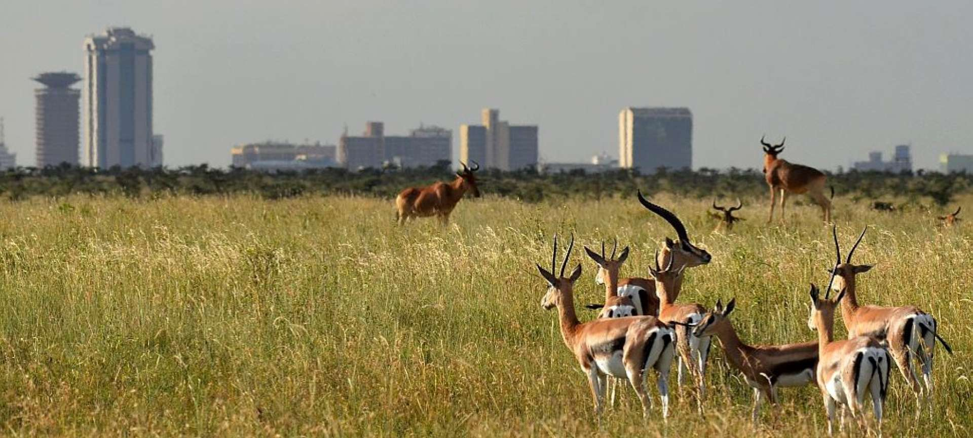 Nairobi National Park - Africa Wildlife Safaris