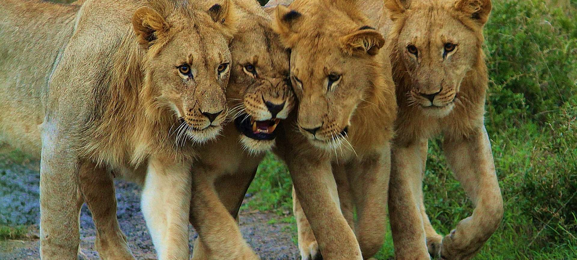 Akagera - Africa Wildlife Safaris