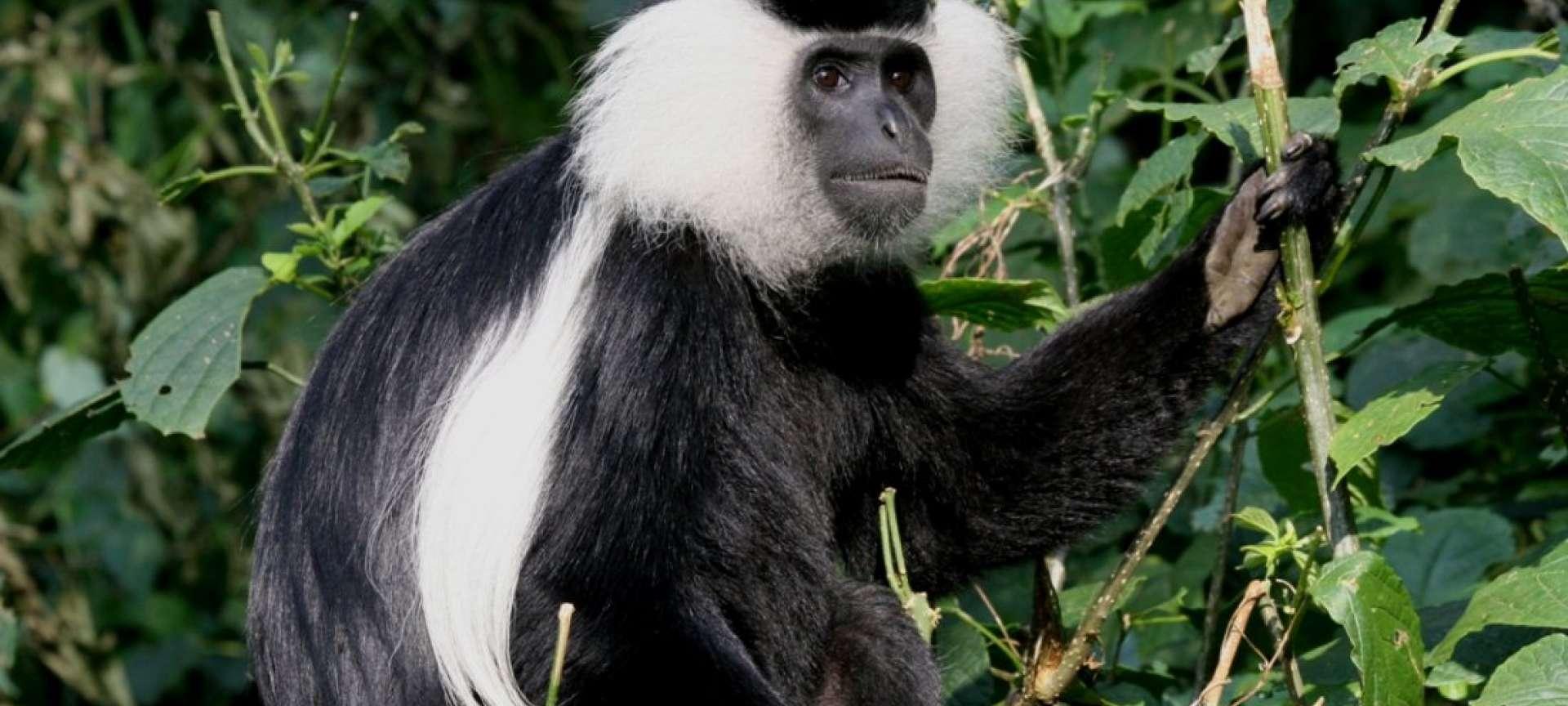Nyungwe Forest - Africa Wildlife Safaris