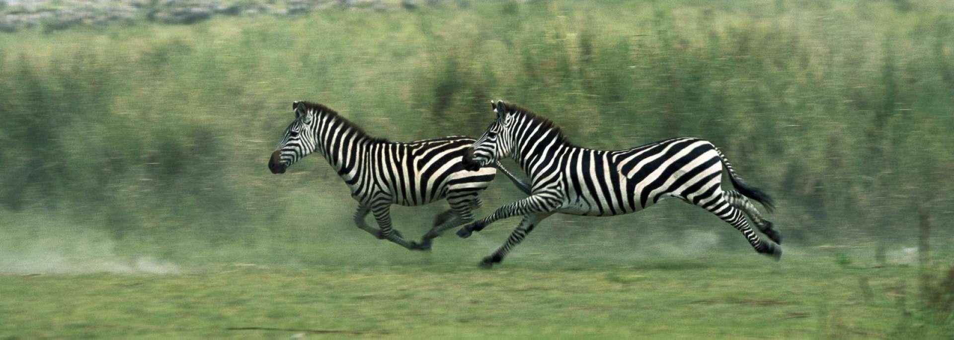 Udzungwa Mountains - Africa Wildlife Safaris