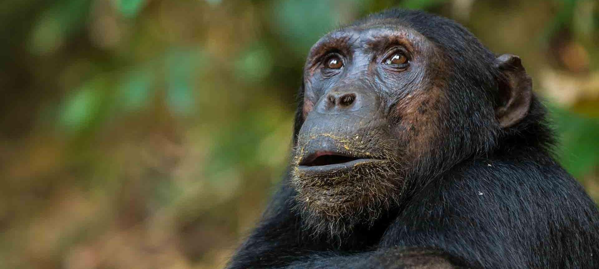 Gombe Stream - Africa Wildlife Safaris