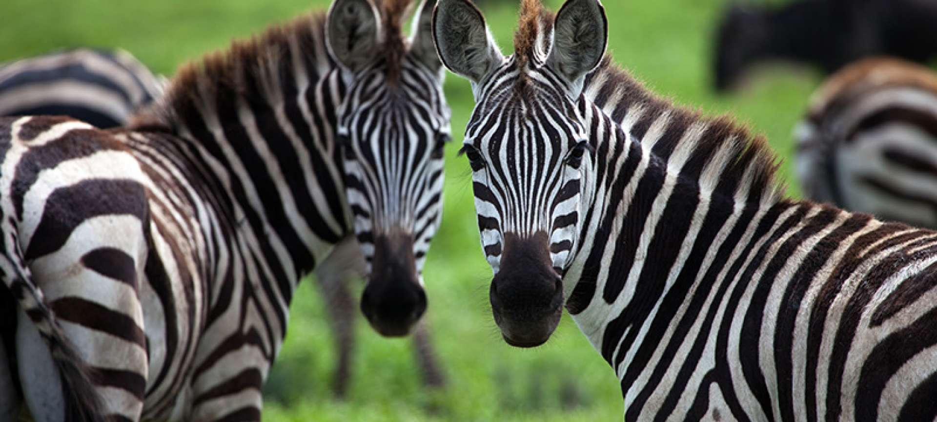 Katavi - Africa Wildlife Safaris