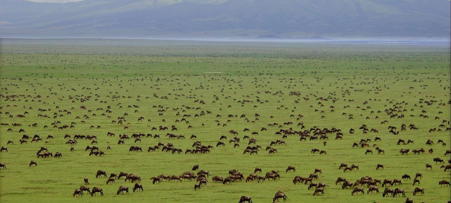 Saadani - Africa Wildlife Safaris