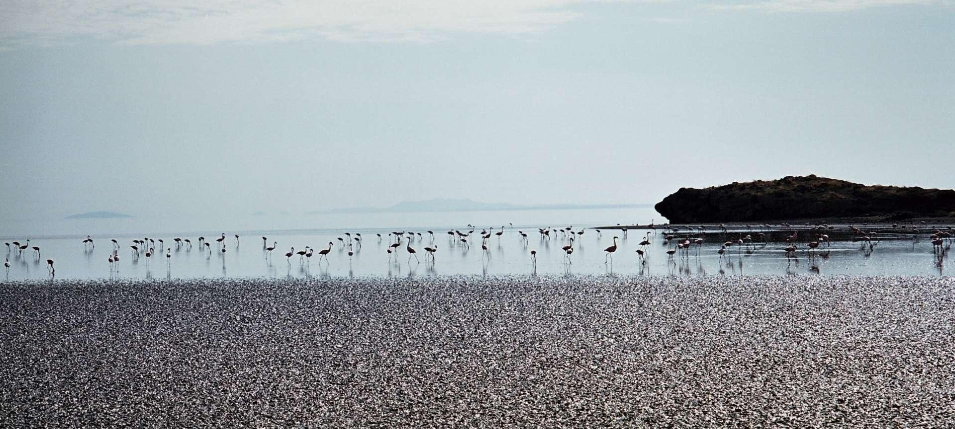 Lake Natron - Africa Wildlife Safaris