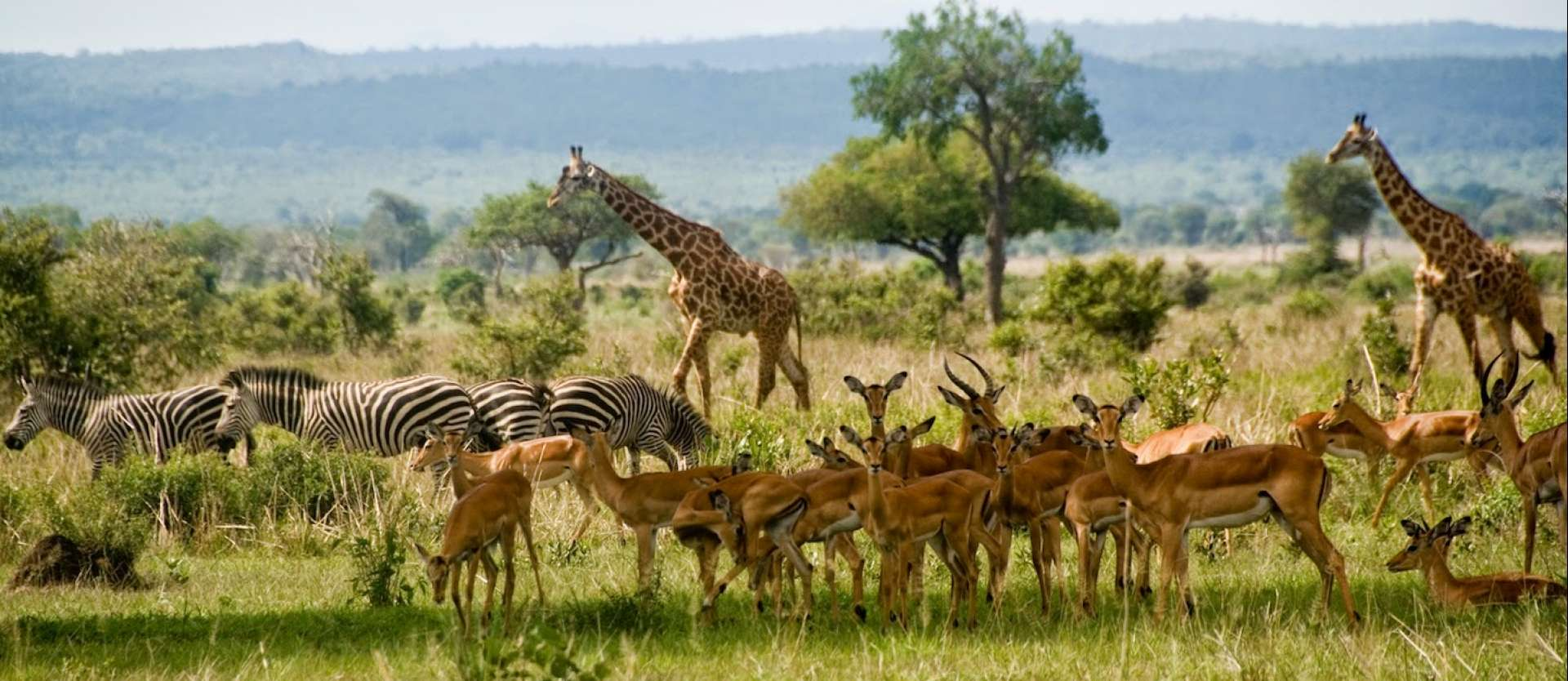 Mikumi - Africa Wildlife Safaris
