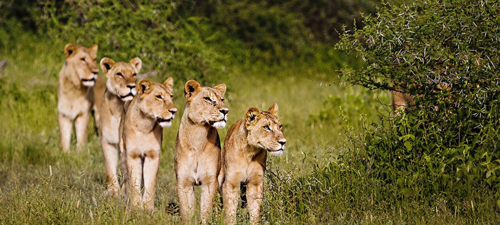 Chief's Island - Africa Wildlife Safaris