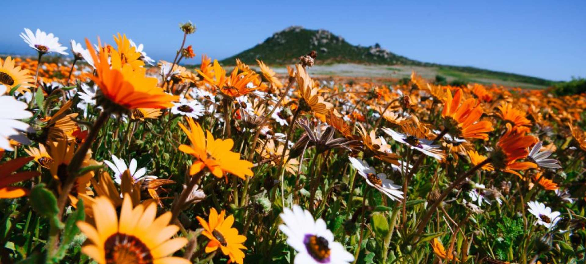 Wildflowers along the west coast in full bloom