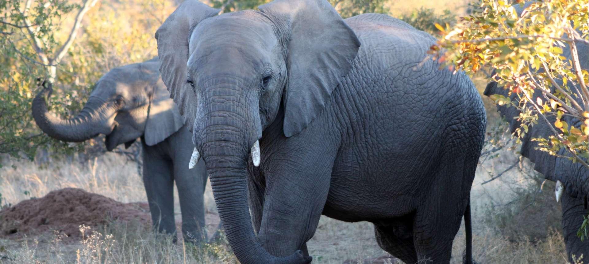 Waterberg - Africa Wildlife Safaris