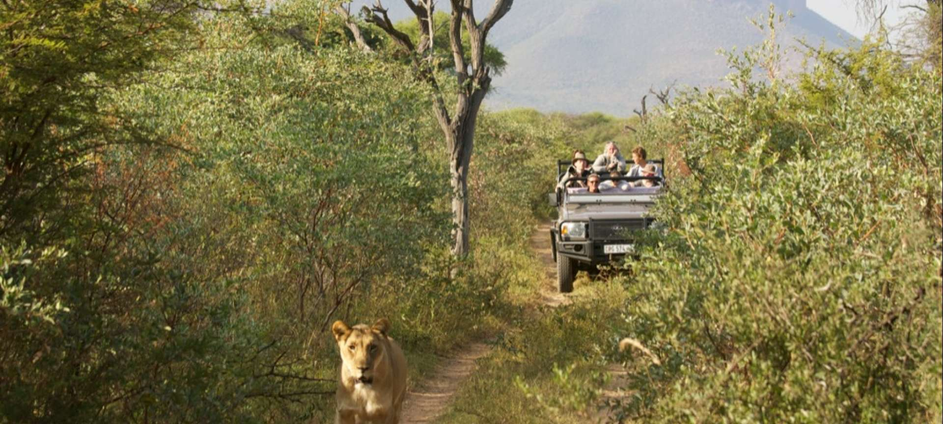 Waterberg - Africa Wildlife Safaris