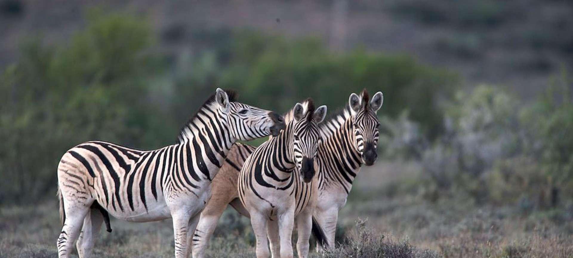 Karoo - Africa Wildlife Safaris