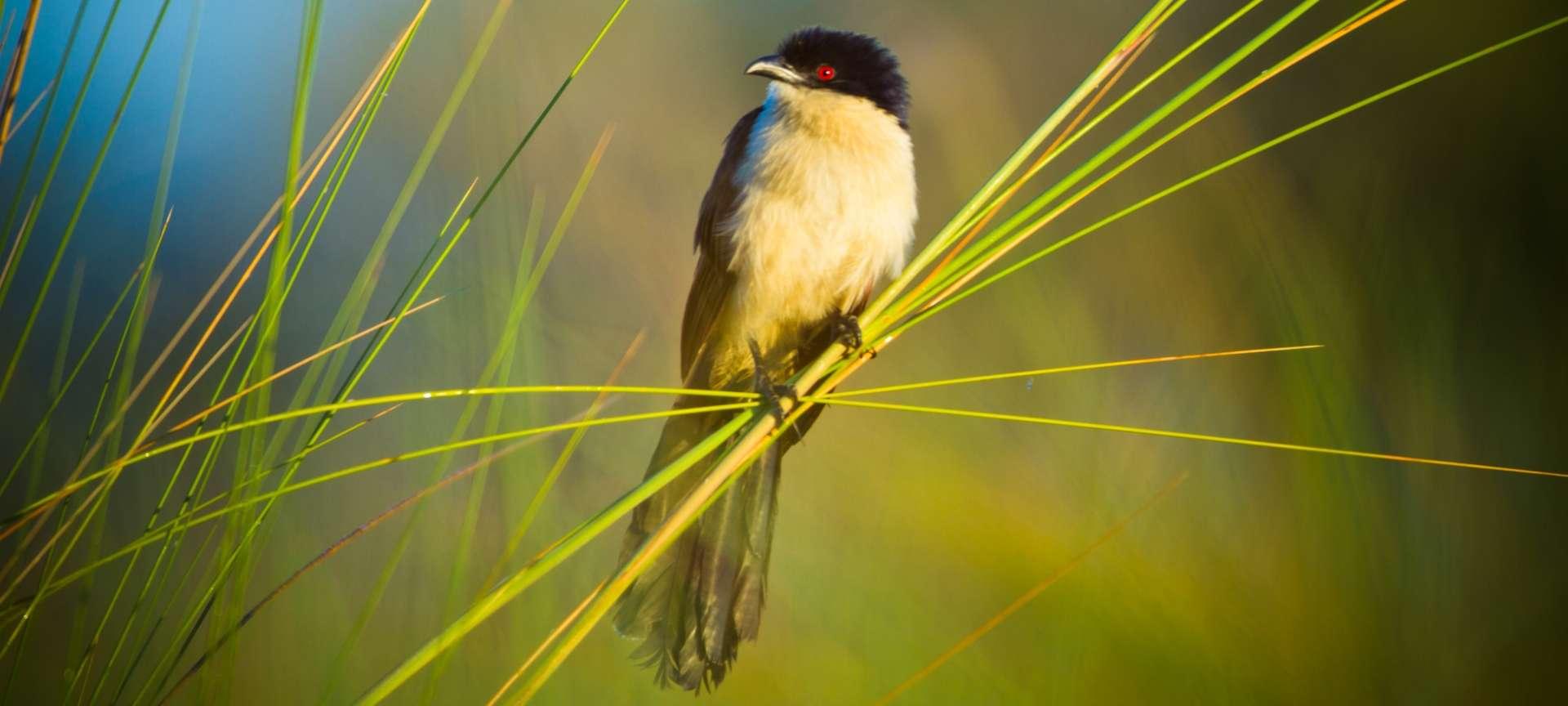 Xaxaba - Africa Wildlife Safaris