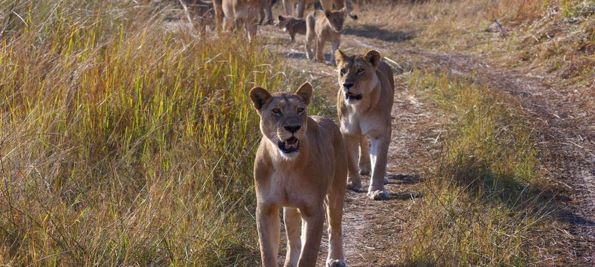 Xakanaxa - Africa Wildlife Safaris