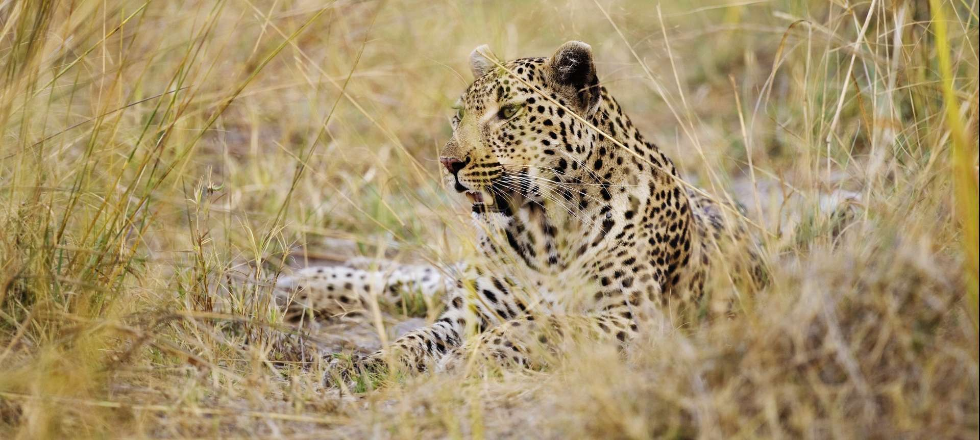 Northern Okavango - Africa Wildlife Safaris