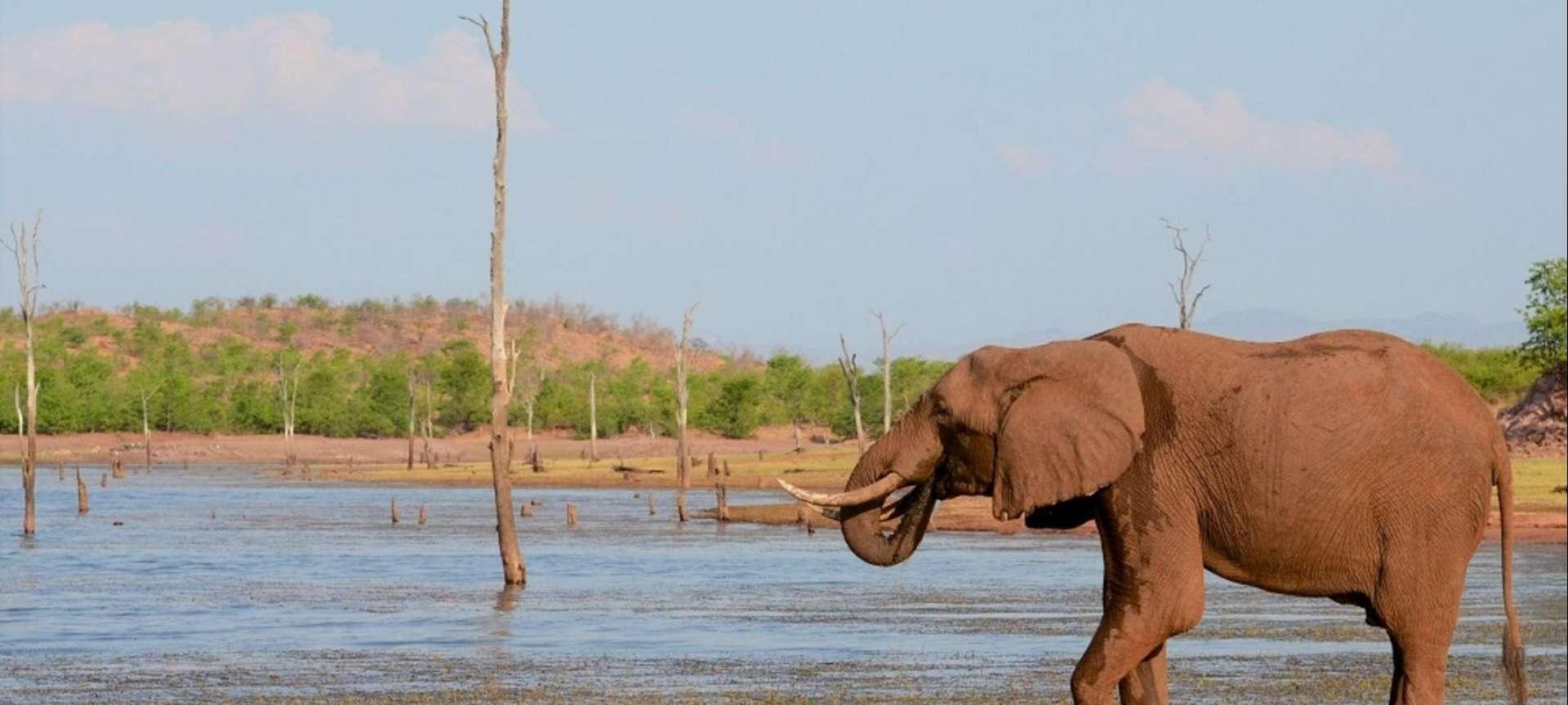 Kariba - Africa Wildlife Safaris