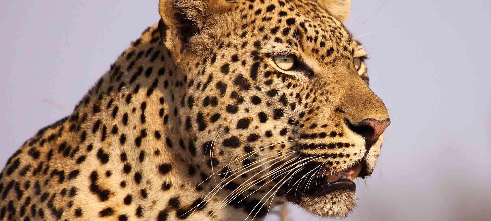 Imbali - Africa Wildlife Safaris