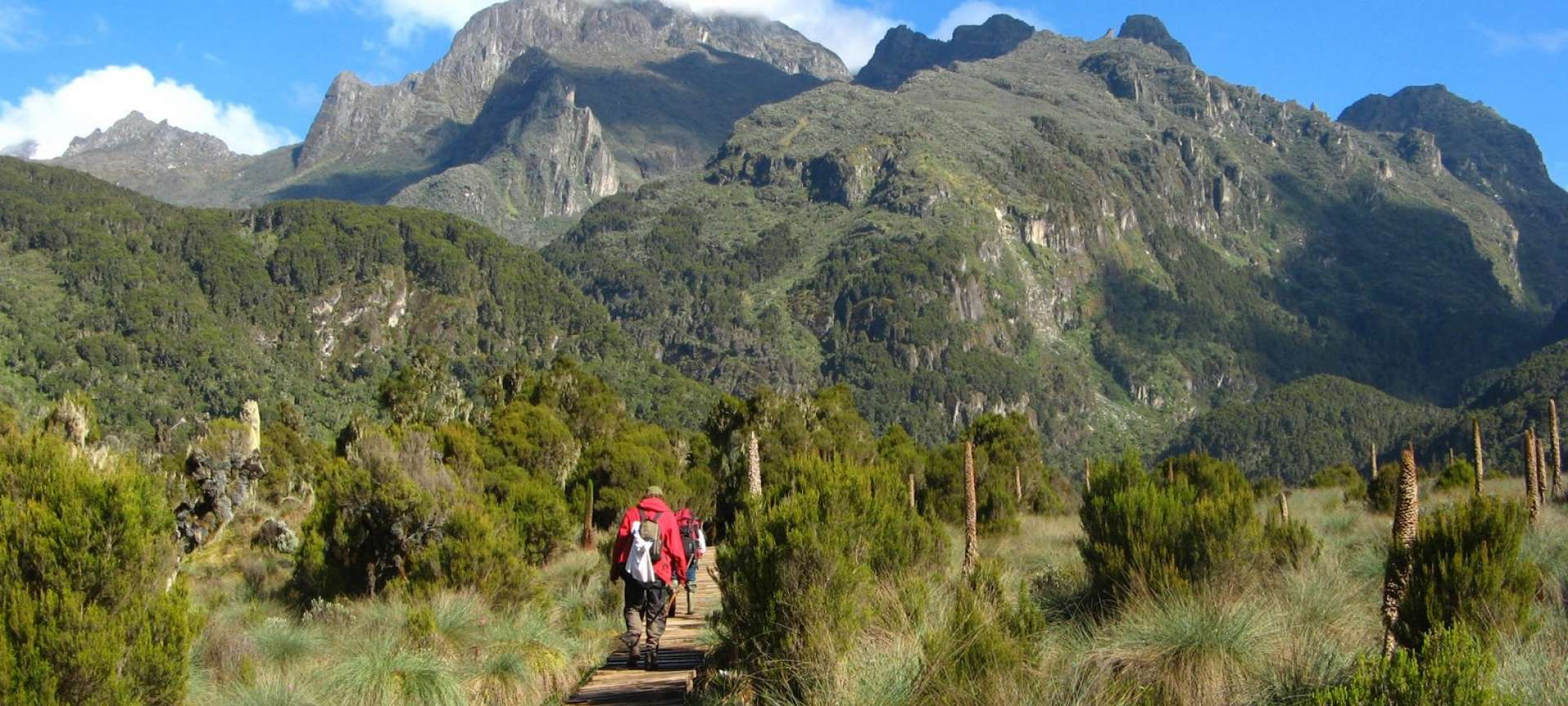 Rwenzori Mountains National Park - Africa Wildlife Safaris